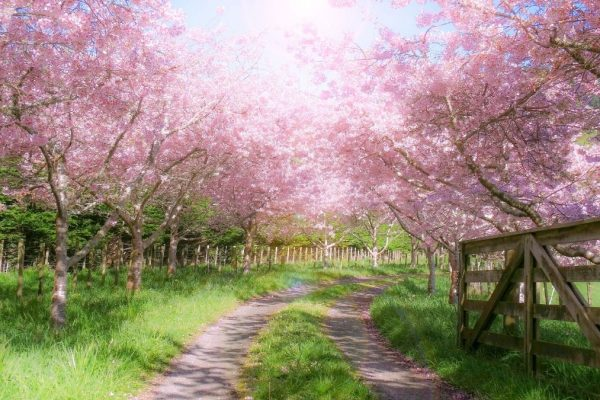 88 Inspirational Spring Quotes for New Beginnings, a Happy Spring and Spring Flowers