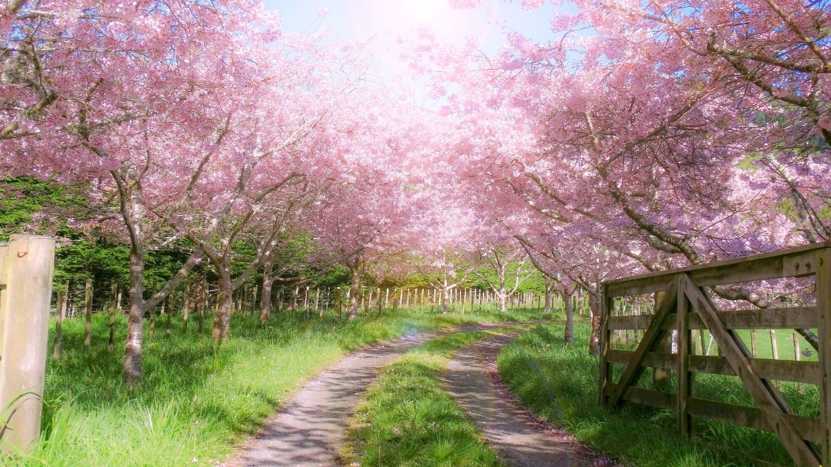 spring quotes fi2